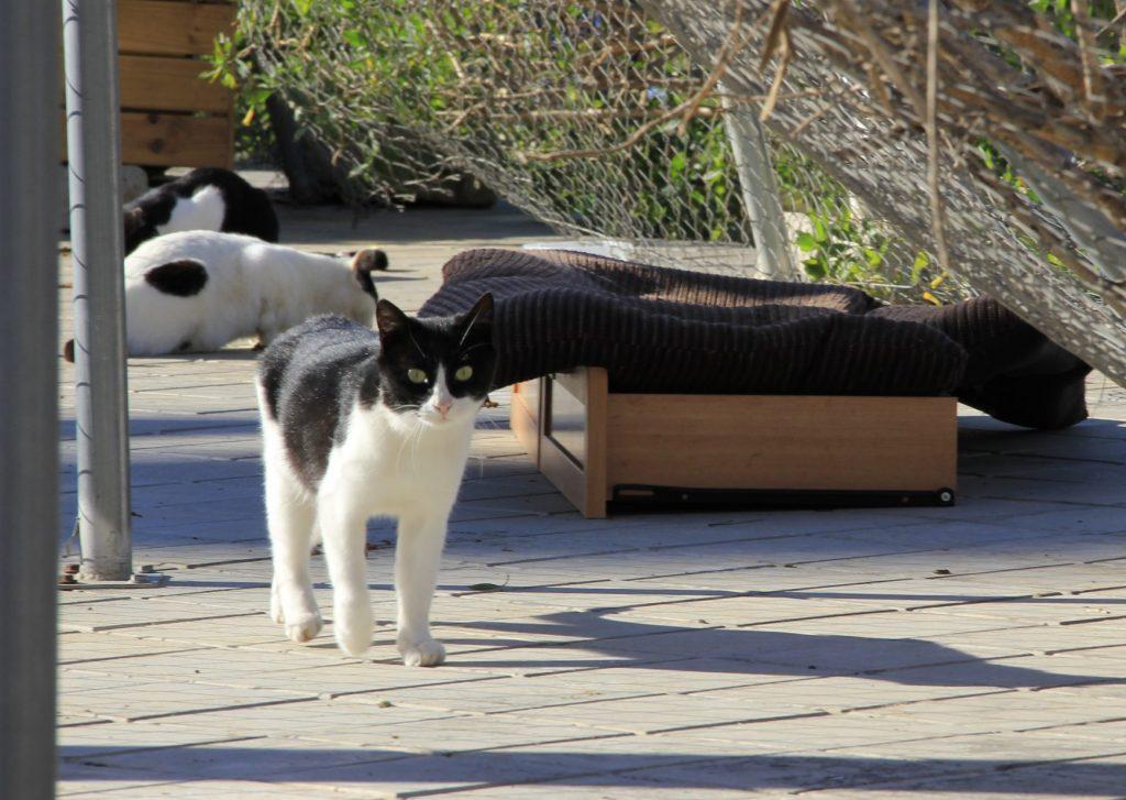 Gatos en refugios preparados en su colonia