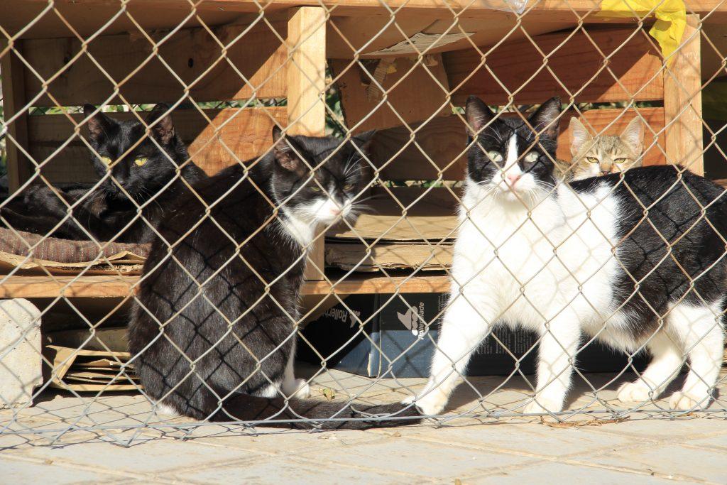 Gatos en uno de los refugios de su colonia