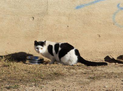 Las cuidadoras de colonias felinas ahorran al ayuntamiento de Valencia más de 423 mil euros cada año
